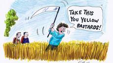 Severe wheat intolerance