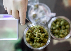 France :Consommation de drogue : la généralisation de l'amende de 200 euros est entrée en vigueur