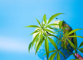 Business :Canopy growth quitte l'Afrique et ferme d'autres installations canadiennes
