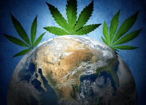Afrique du Sud: Sera t il le troisième État à légaliser le cannabis récréatif?
