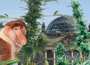Société :Covid -19 ,un declencheur pour le cannabis