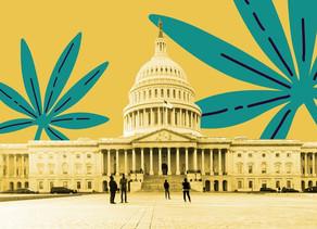 USA :Le vote historique de la Maison blanche pour légaliser la marijuana est prévu ce mois-ci