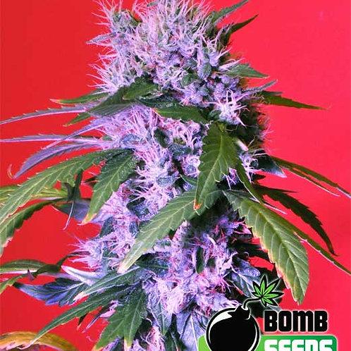 Berry Bomb feminized