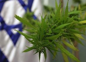 Israel :De l'huile de cannabis autorisée à l'exportation des États-Unis vers Israël