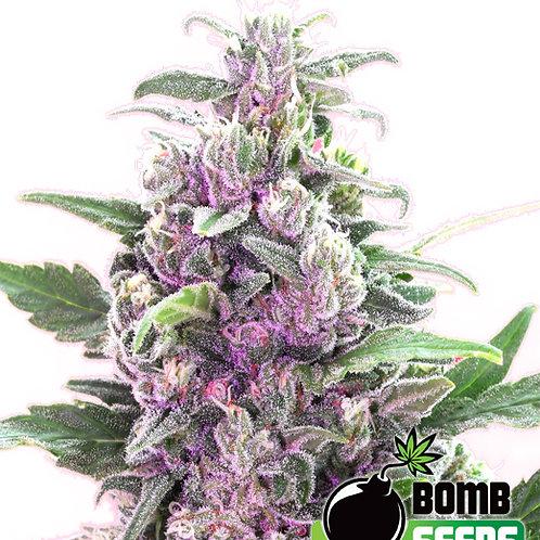 THC Bomb feminized