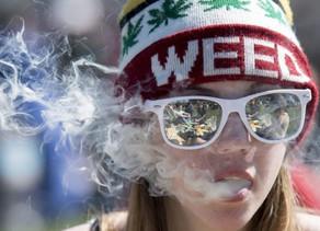 """Société :""""Je vais expliquer pourquoi les États-Unis sont si loin devant l'Europe sur le cannabis."""""""