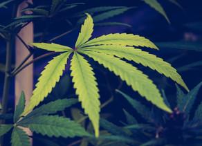 Business :Ben & Jerry's utilise 4/20 pour promouvoir la réforme de la marijuana