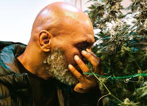 """People :Mike Tyson """"imprimera"""" des boissons au cannabis grâce à une innovation technologique"""