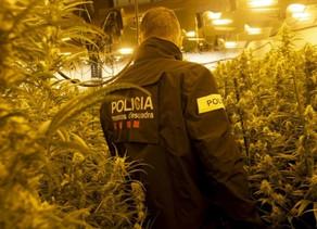 """Espagne :L'Espagne, la """"ferme de cannabis"""" de l'Europe"""