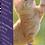 Thumbnail: Goodlifecat complément alimentaire 250 mg  spectre complet