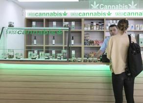 Suisse :Des tests de distribution de cannabis devraient avoir lieu