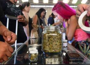 Santé : qui pourra expérimenter le cannabis thérapeutique en France?