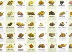 Culture :La génétique du cannabis célèbre et son histoire: pourquoi ces noms étranges?