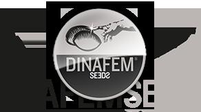 Culture :En 2020, Dinafem Seeds fête ses 15 ans