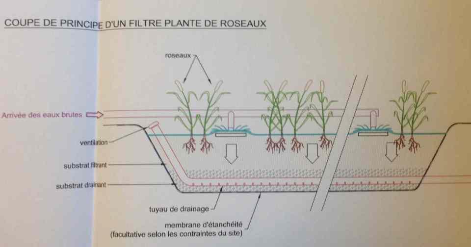 step1-roseaux