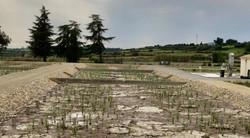 Station d'épuration croissance des roseaux