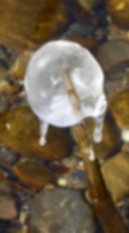 Bildschirmfoto 2019-01-25 um 08.57.48.pn