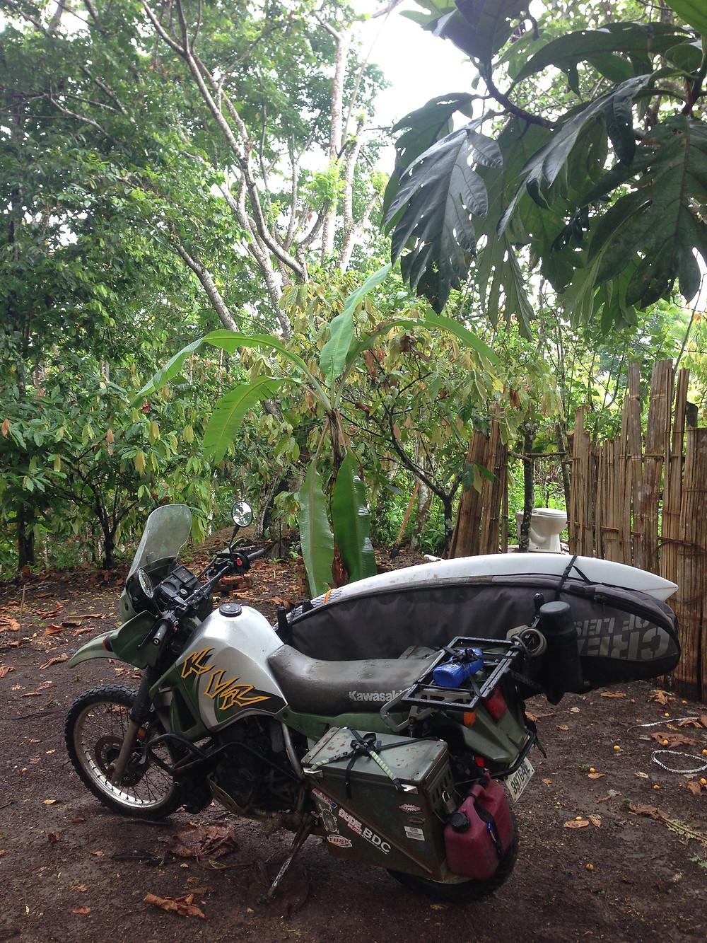 Jungle Burro