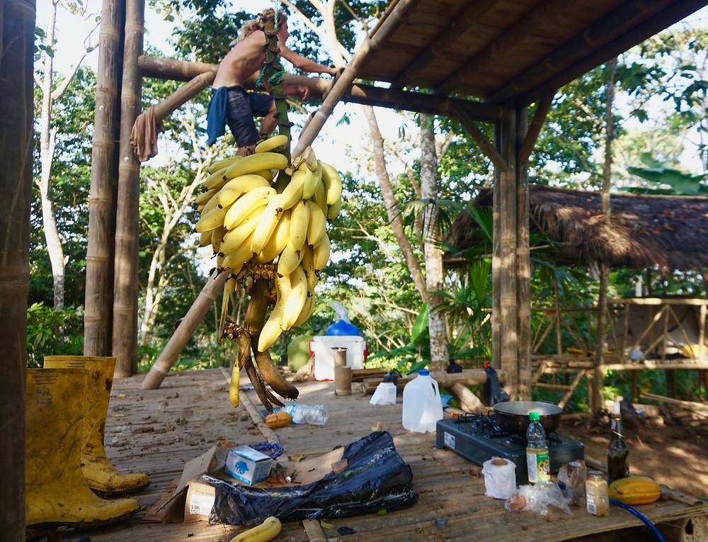 Banana problem, more than a man can eat...