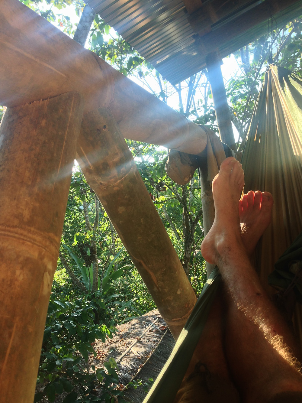 Jungle chilling, living the high life and drying the battle wounds.