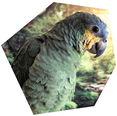 our-story-birdline.jpg