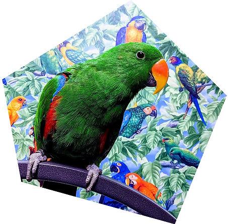 how-you-can-help-birdline.jpg