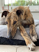This image shows a type of animal supported by this UK animal shelter