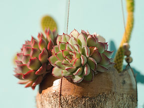 shallow%20focus%20photo%20of%20succulent