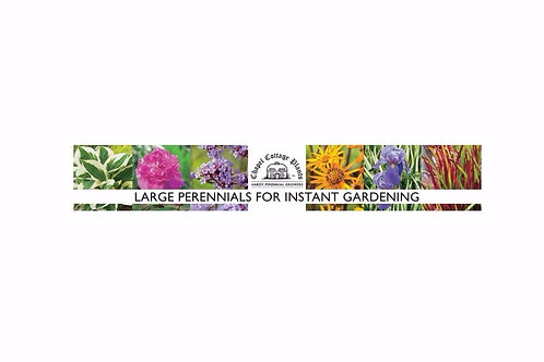 """Large Perennials For Instant Gardening"" Benchwrap (per metre)"