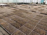 seed trays 2.jpg