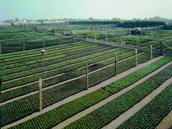 fields 1