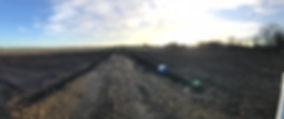 new field 1.jpg