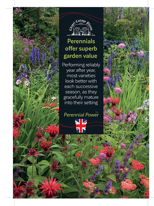 """""""Perennials Offer Superb Garden Value"""" A3 Correx"""
