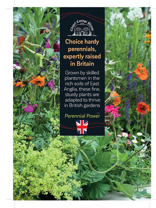 """Expertly Raised Perennials"" A3 Correx"