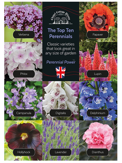 Top 10 Perennials A3 Correx