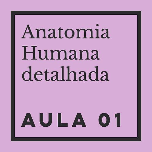 AULA 01: Pés: estrutura óssea & ângulos