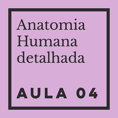 AULA 04: Cabeça: distorções exageradas