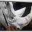 Thumbnail: AULA 06:  Gestual de animais