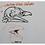 Thumbnail: AULA 04: Aves - análise geral