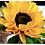 Thumbnail: AULA 06: Flores - Fórmulas de peônías, lótus & girassol