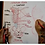 Thumbnail: AULA 03: Tórax - estrutura óssea & muscular