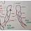Thumbnail: AULA 04: Braços - estrutura óssea & muscular