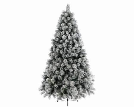 Snowy Vancouver Tree