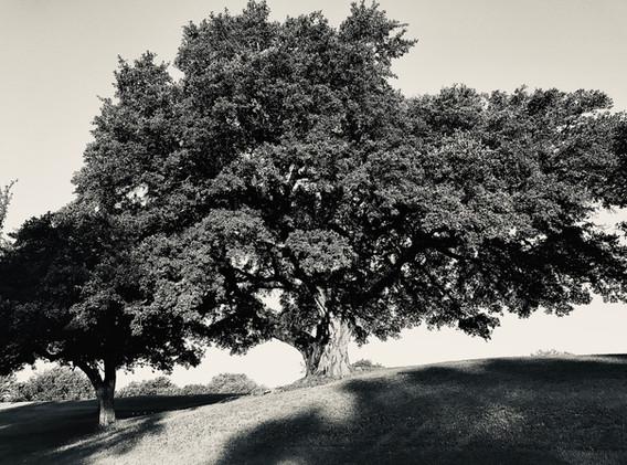 Live Oak, #3 Fairway