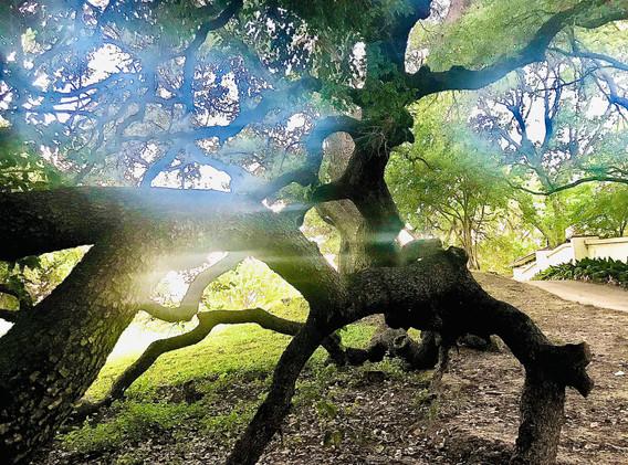 Double Oak, #6