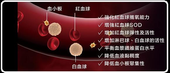 血管.png