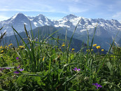 Jungfrau_Ausflug_2012_00035.jpg