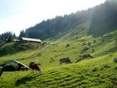 Jungfrau_Ausflug_2012_00010.jpg