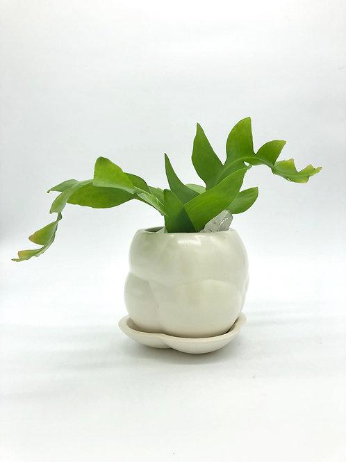 Hoggle Planter