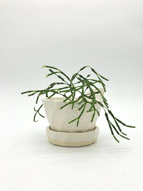 Fizgig Planter